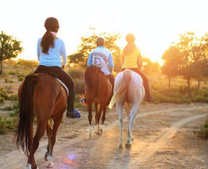Co powinien oferować dobry sklep jeździecki?